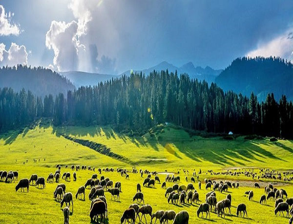 Yusmarg-Green-Kashmir-Travels