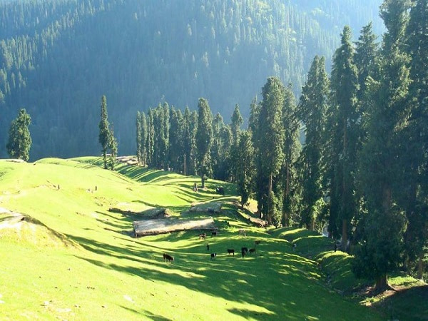Bangus-Valley-Green-Kashmir-Travels