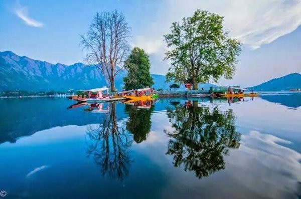 Char Chinar Dallake Srinagar Green Kashmir Travels